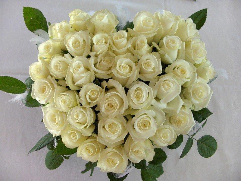 Картинки, картинки белые розы поздравления