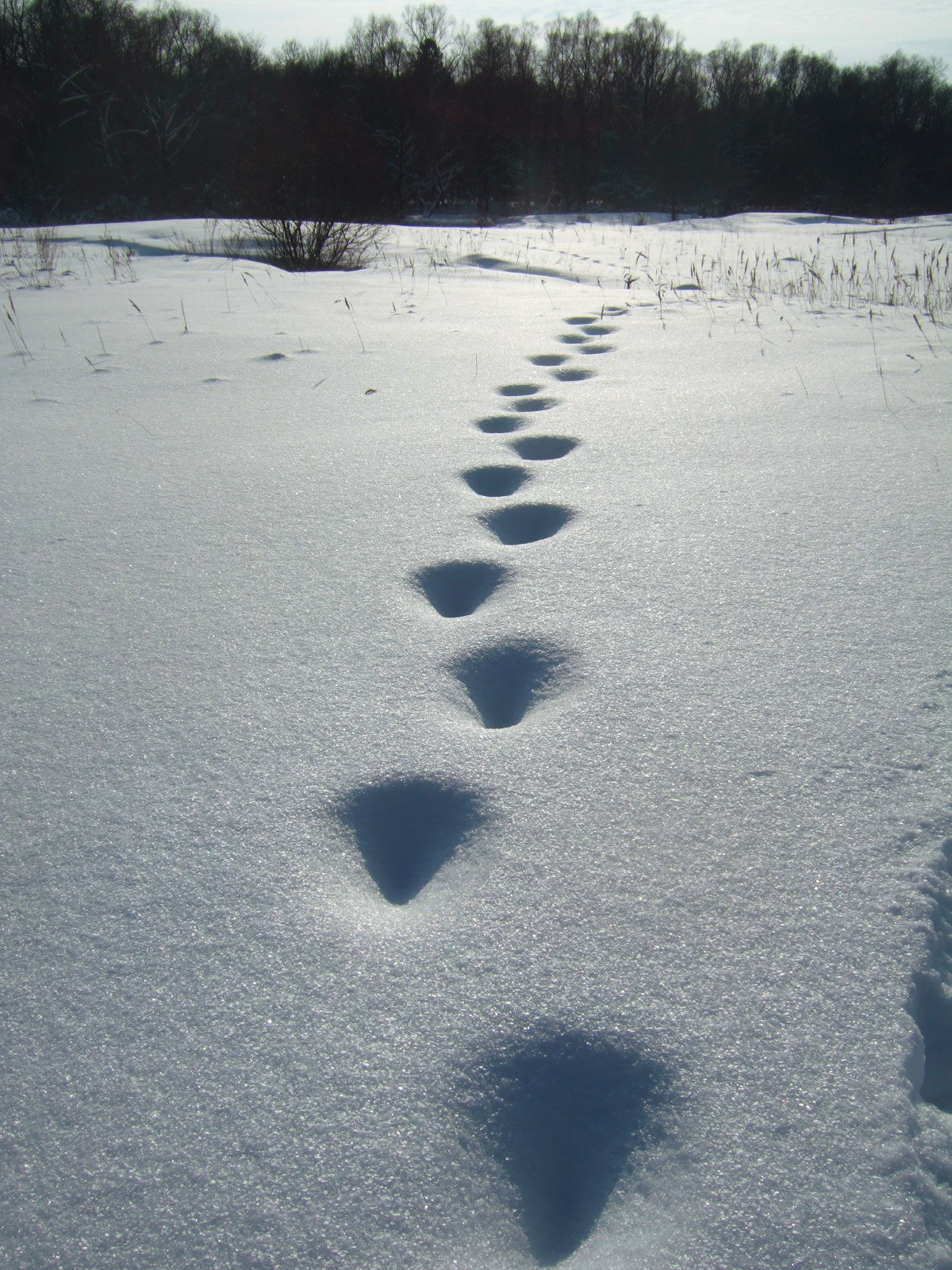 Картинка снежные следы