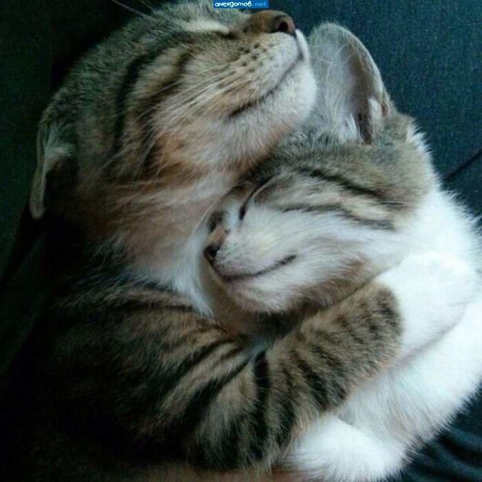 Картинки с надписями кошки о любви, солдата