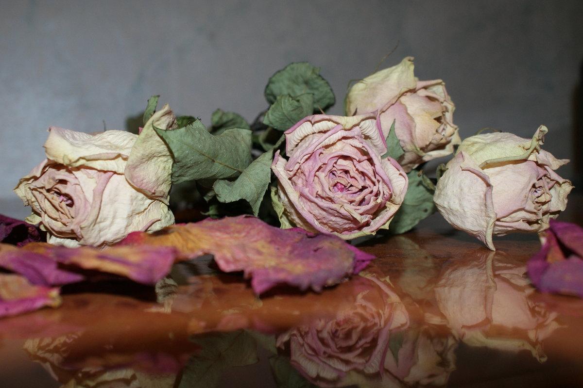 фотографии цветы завяли состав мисо временем