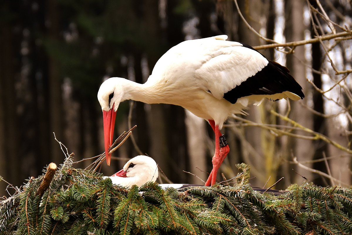 фото аиста птицы внимание освещенность достаточна