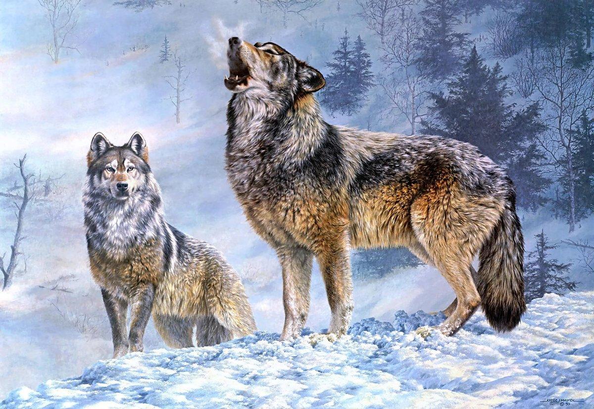 Нарисованные волки своими руками фото 560