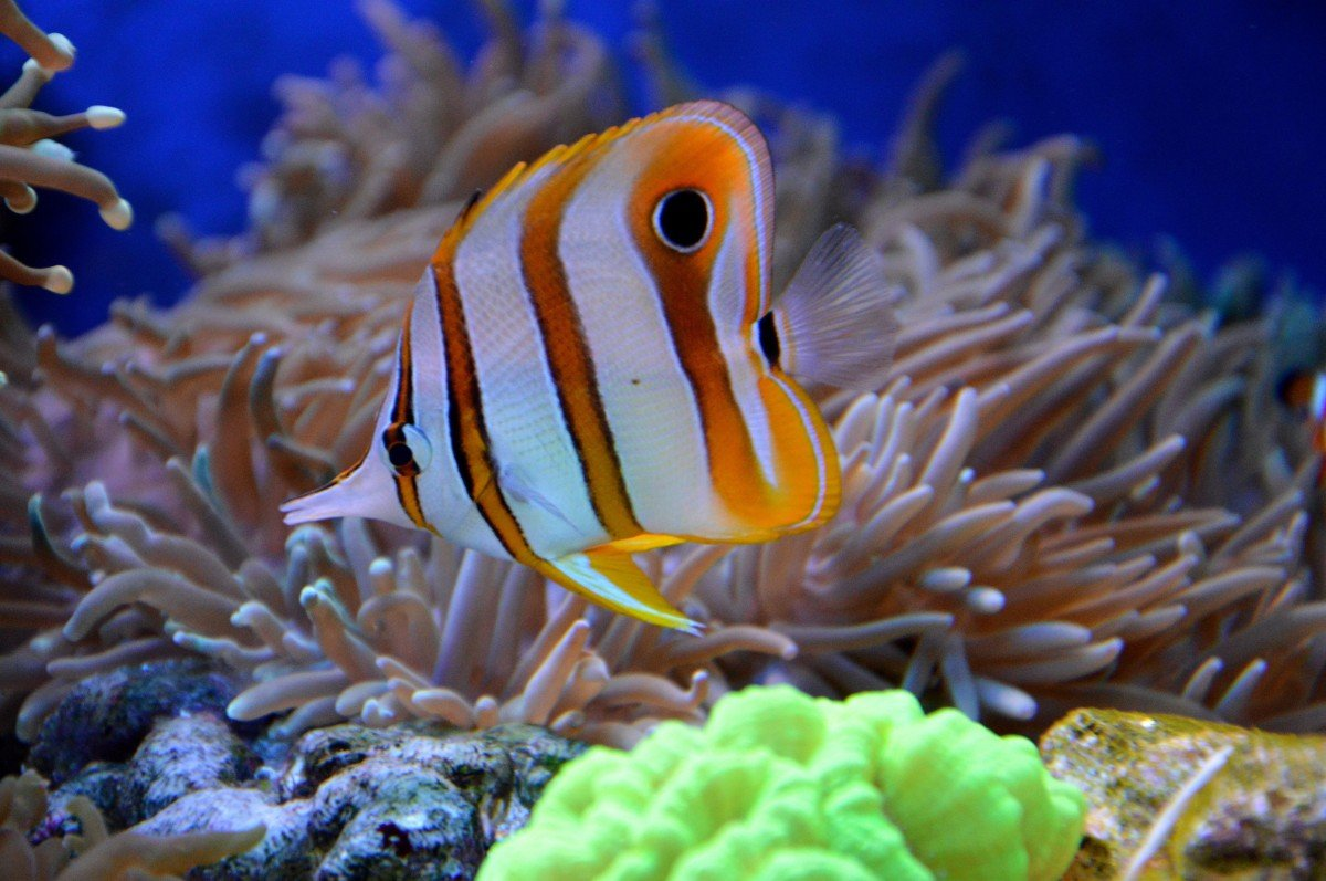 Самые красивые рыбы в мире фото