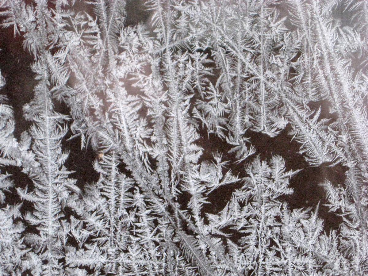 Картинки найди животных в морозных узорах