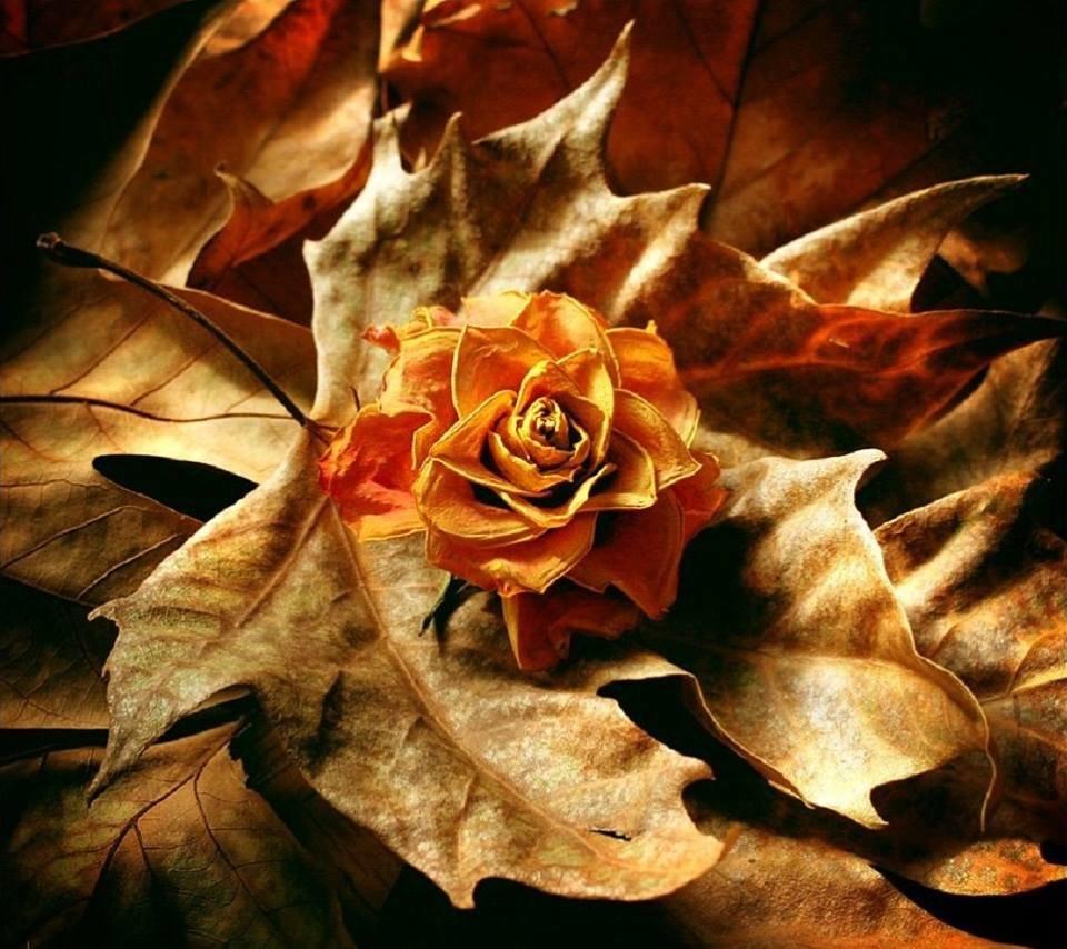 Розы и листья на открытках, называется