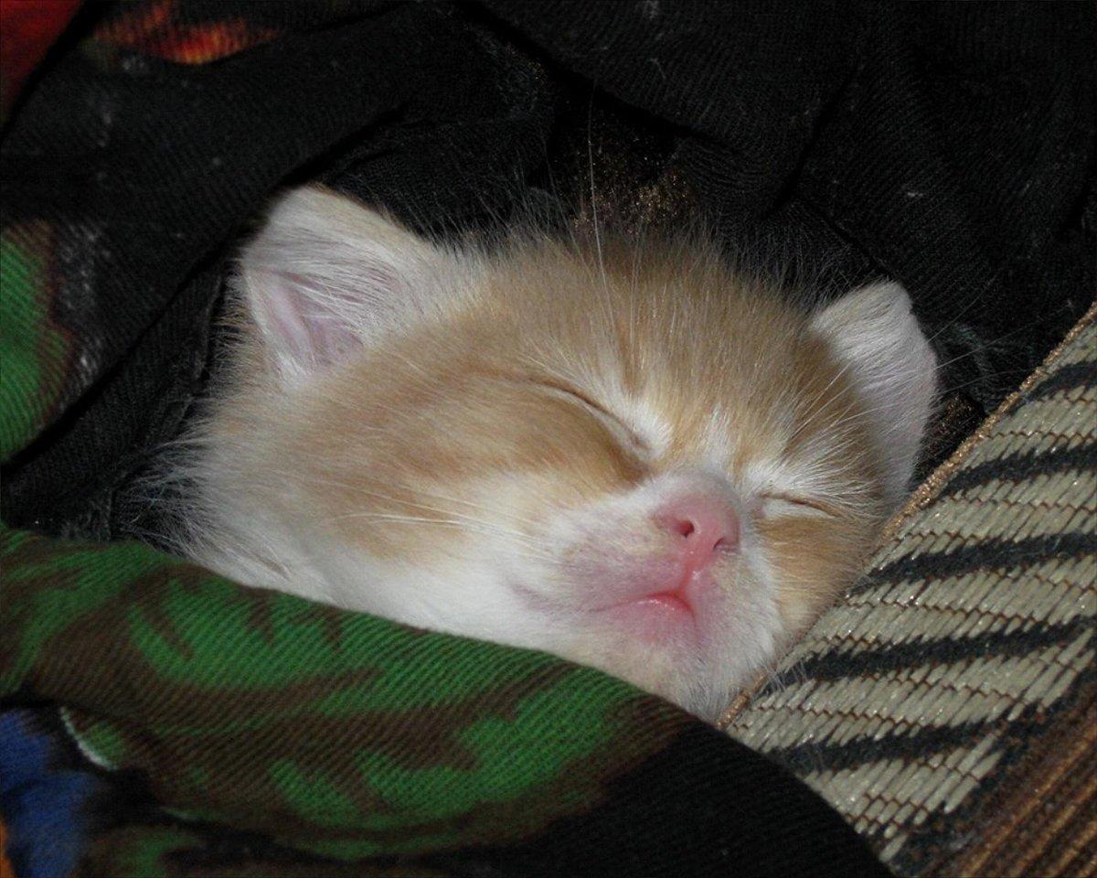 Котики смешные картинки с надписями хотят спать