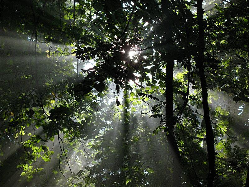 фото в лесу после дождя василия