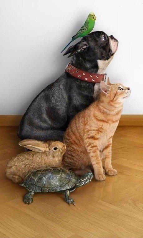 Про поросят, смешные истории с животными картинки