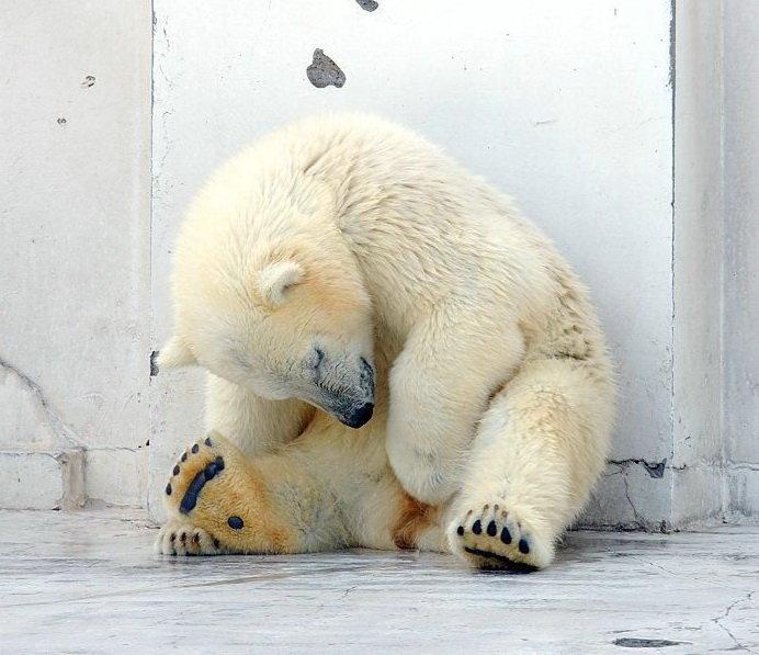 Веселый медведь картинки с надписями