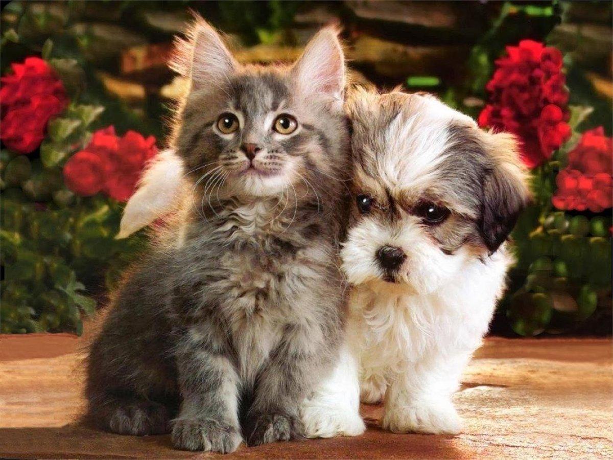 Открытка, картинки с кошечками и собачками