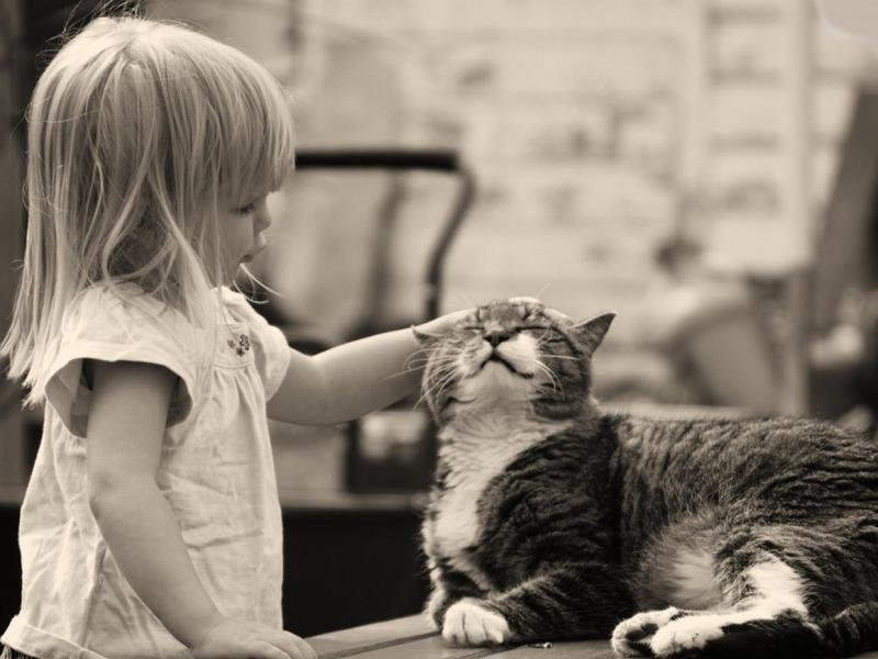 Картинки девушка гладит кота