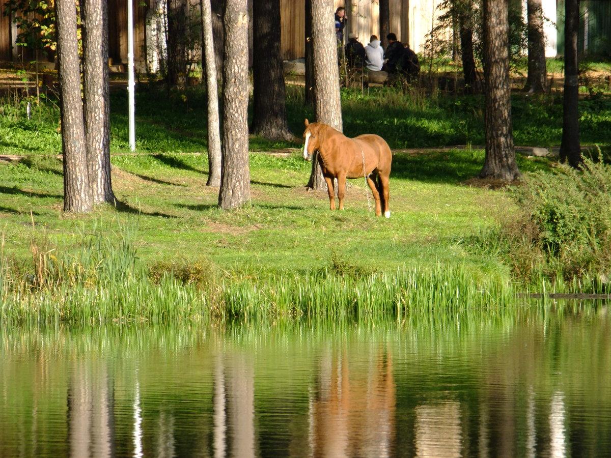 холодном озеро конь в картинках назывался центральный