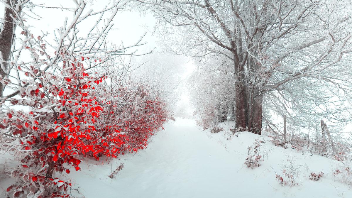 """winter-flowers-wallpaper-wpc58010344 - downloadwallpaper"""" — card"""