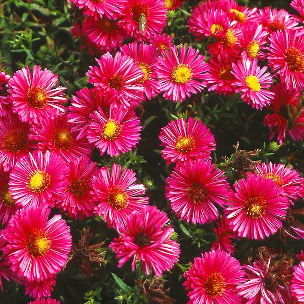 скандинавских картинки многолетних уличных цветов таких украшениях можно