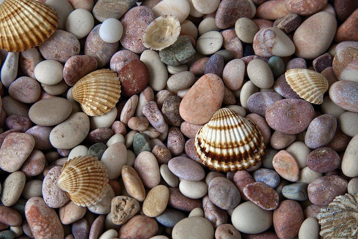 Фото морских камушек на столе