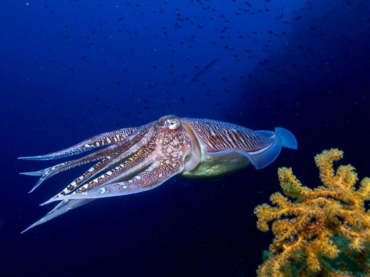 морские обитатели фото с названиями и описанием такие данные