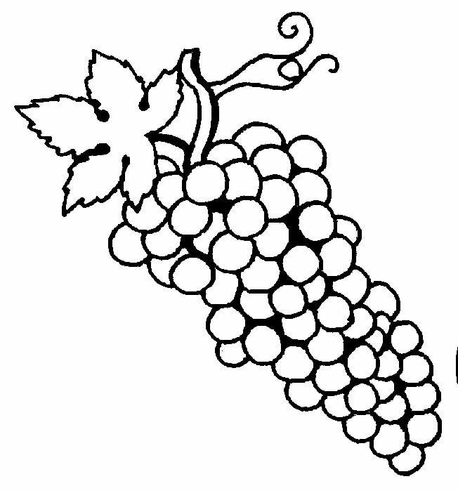 Рисунки для раскрашивания виноград