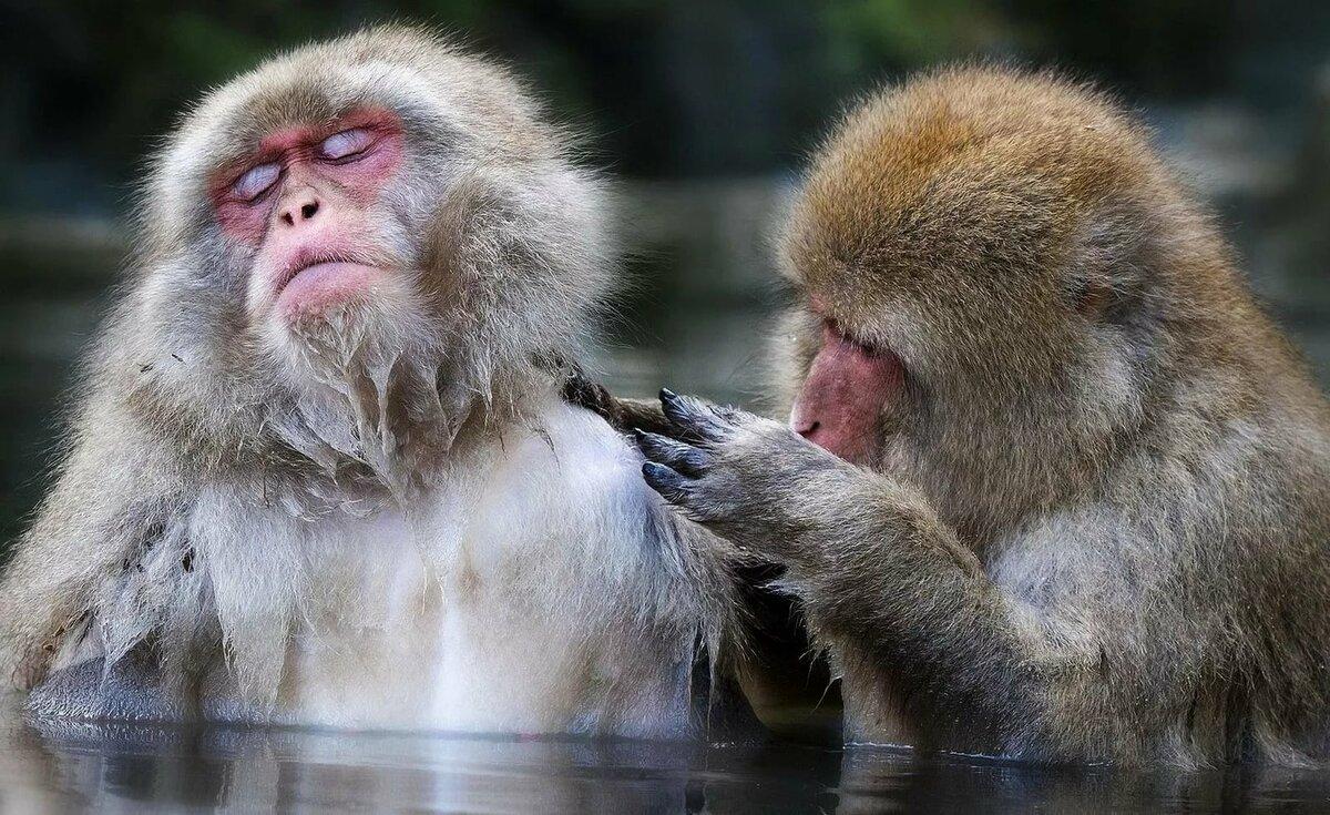 араб картинки двух обезьян смешные нарисовать ребенком сказку