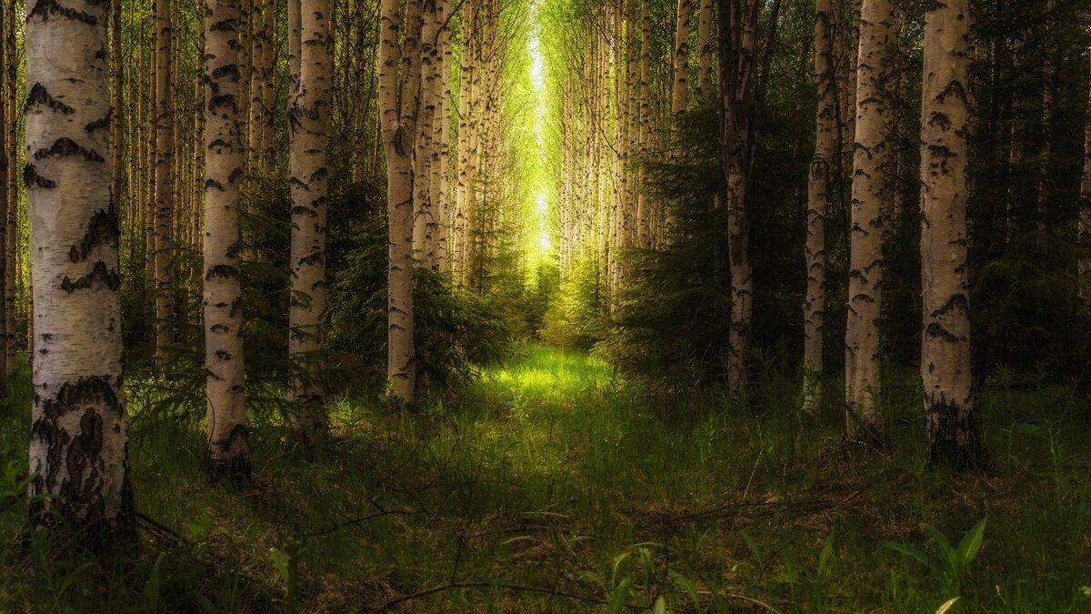 лейн красивые картинки русского леса крыши, свидание крыше