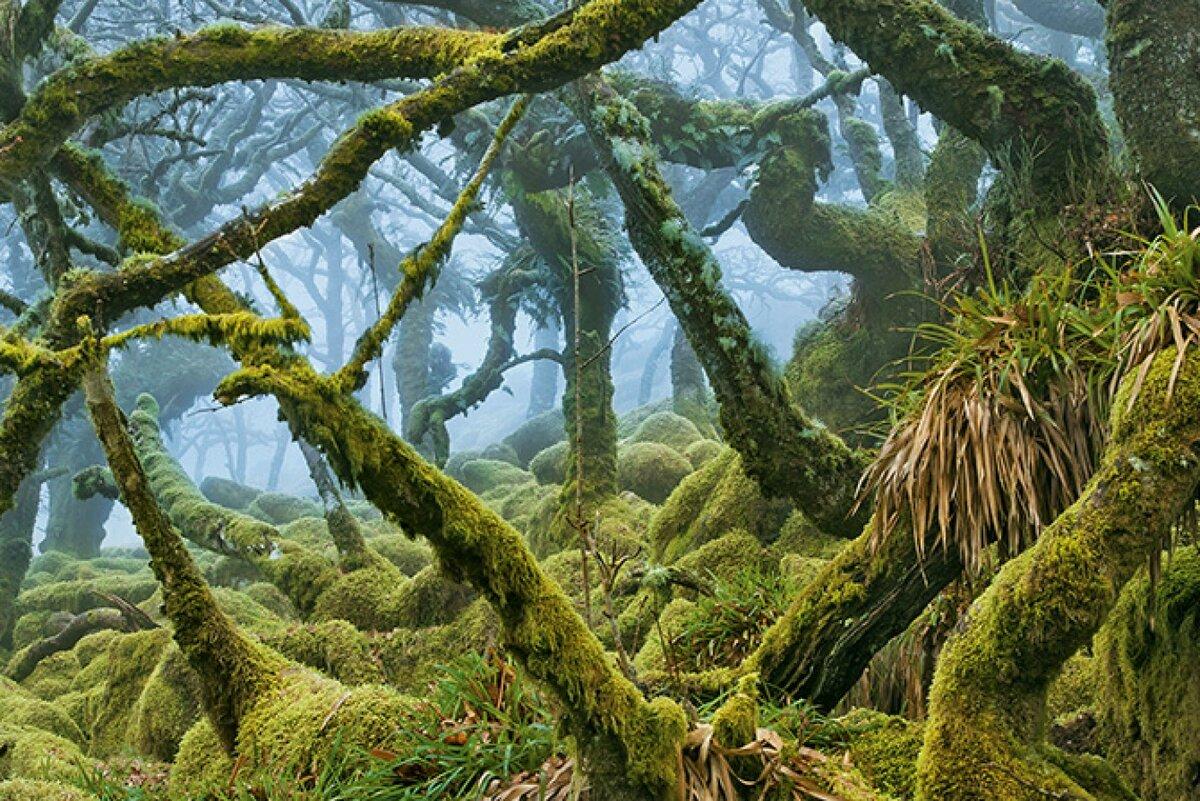 чего картинка древний мир природа так
