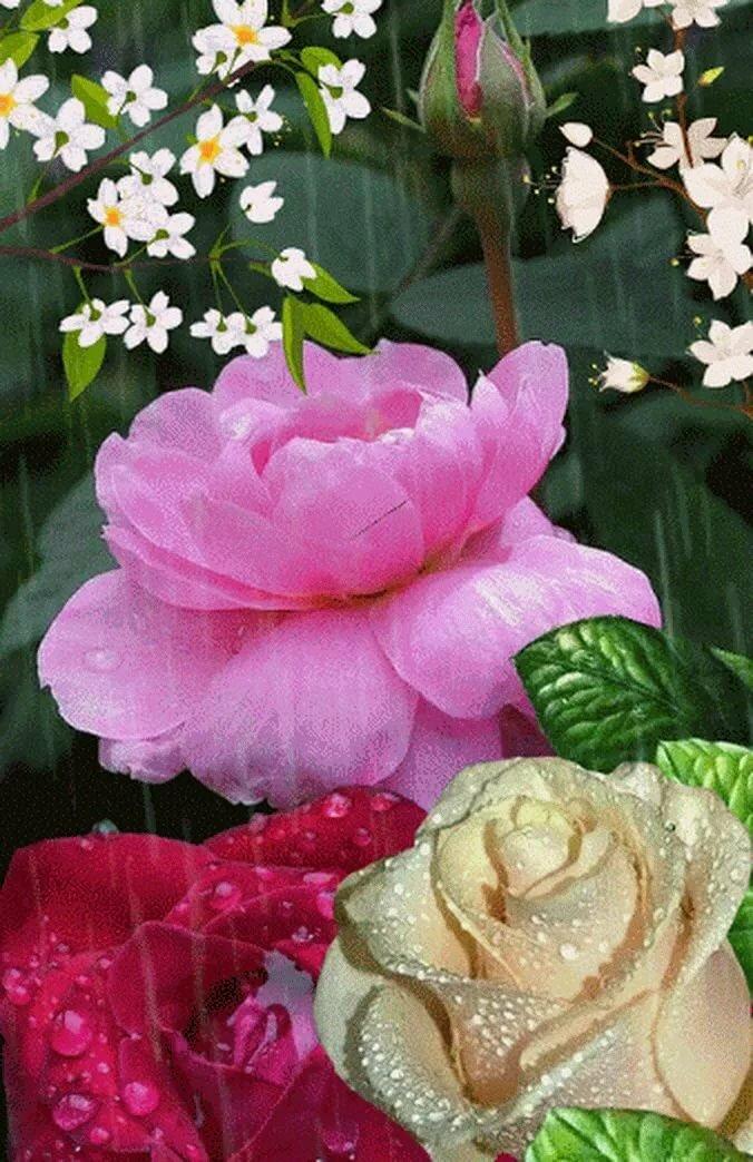 красивые анимация цветов