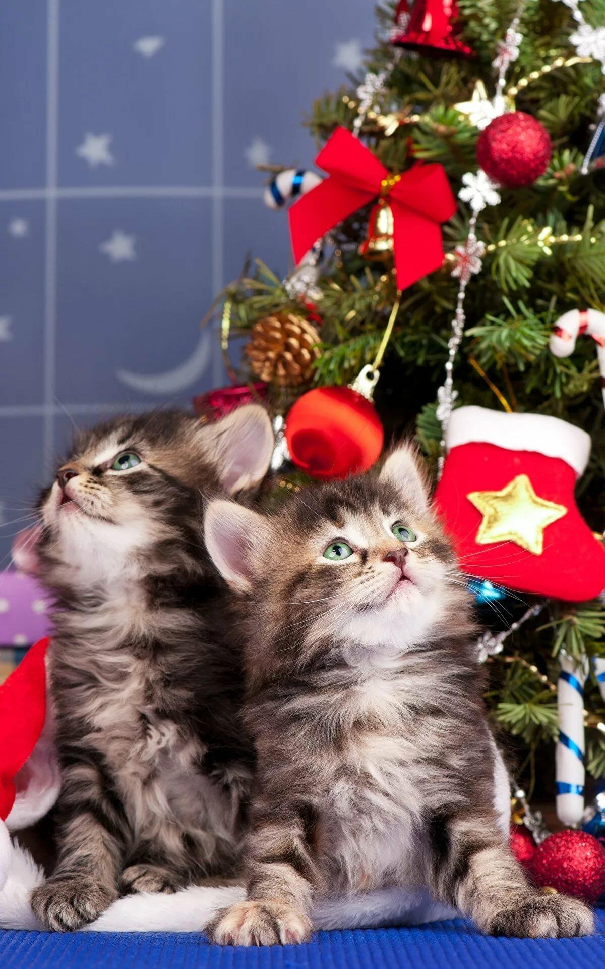 Котенок картинка с новым годом