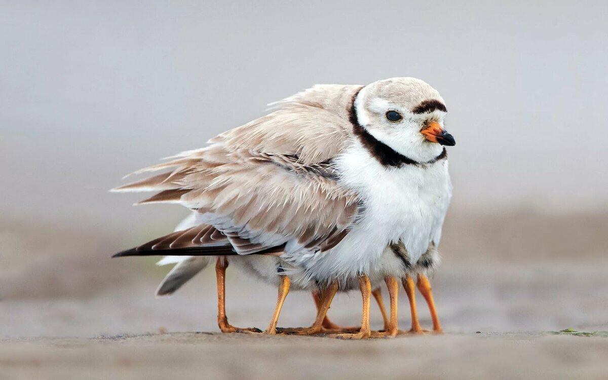 Прикольные птицы в картинках