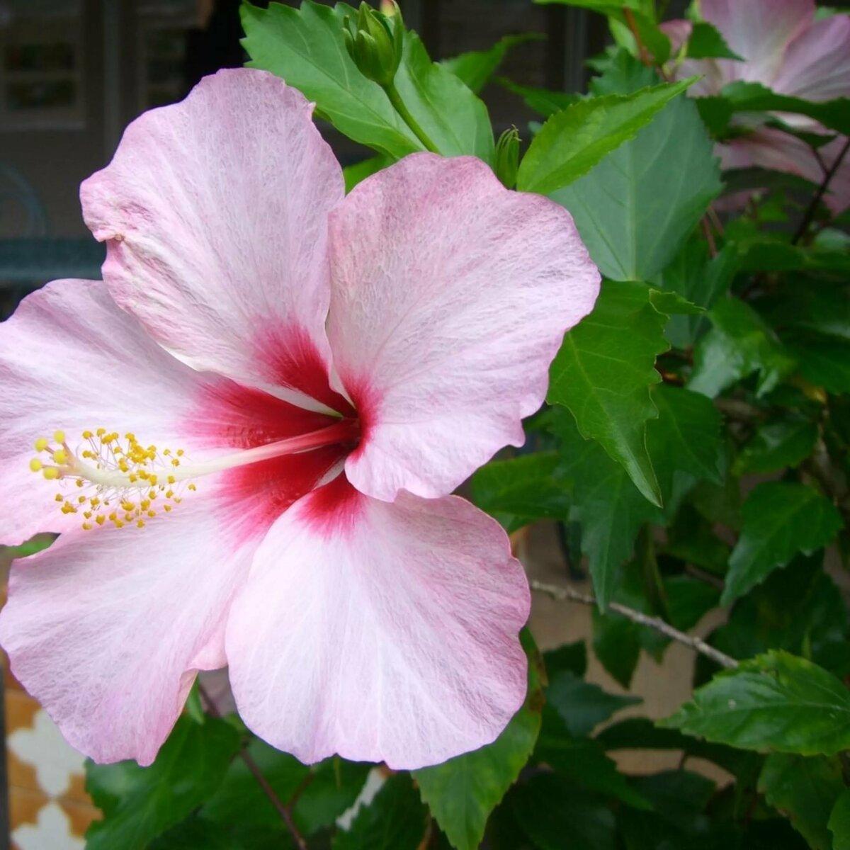 китайские цветы фото и названия подумала