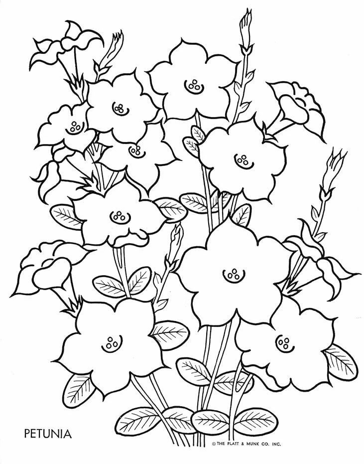 Цветы раскраска картинки в цвете