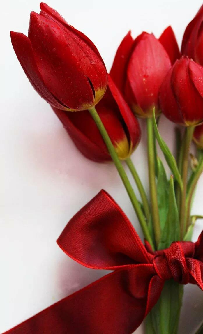 Открытки с красными тюльпанами, брату день рождения
