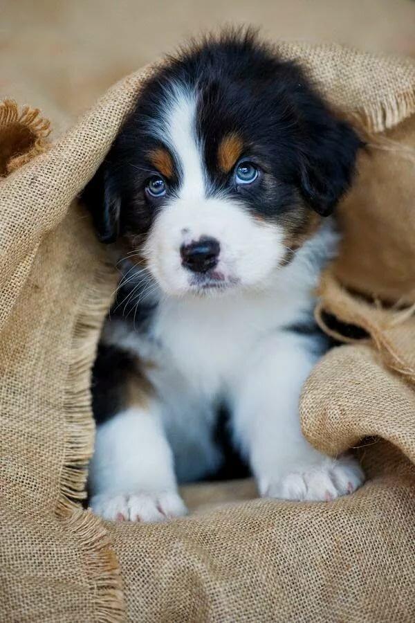 приёме смотреть картинки фото собак найдете примеры ремонта