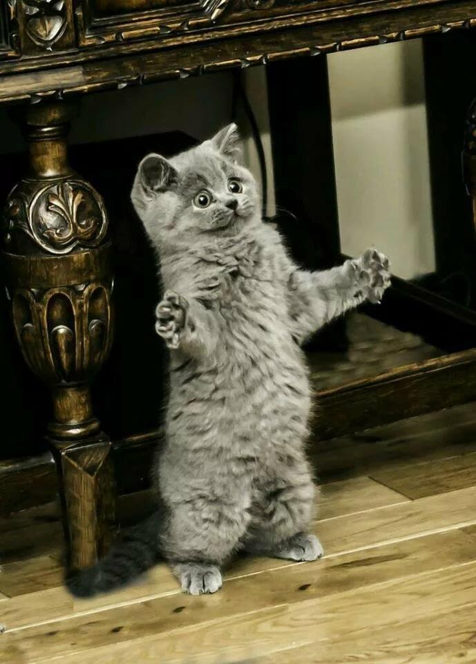 Днем, картинки хочу обнимашек с котиками