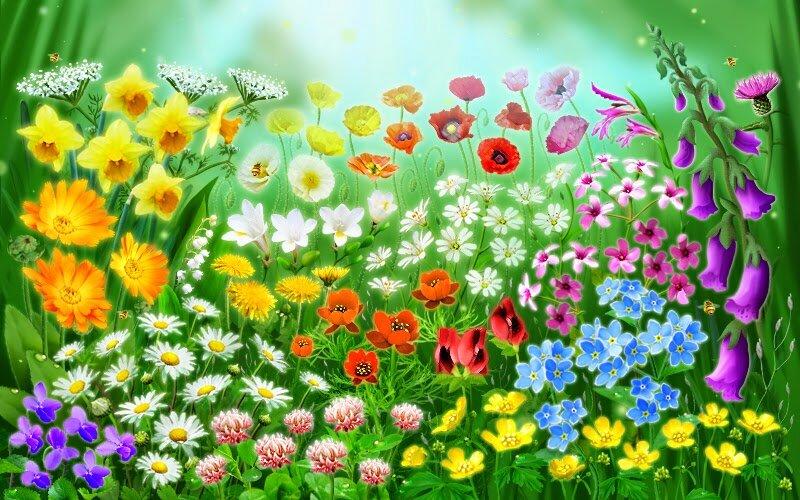 Картинка цветов на полянке для детей