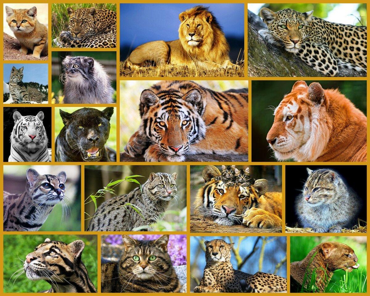 своих все кошачьи список с картинками вам познакомиться