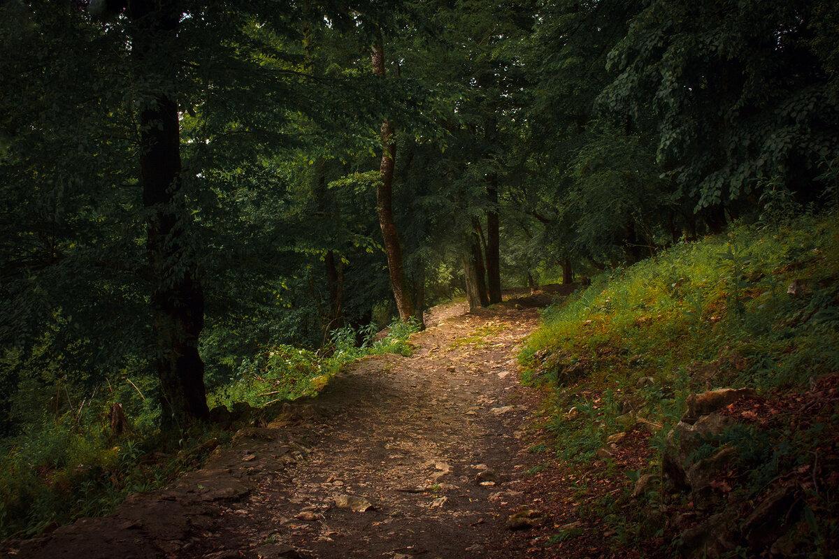 Фотографии тропинка в лесу
