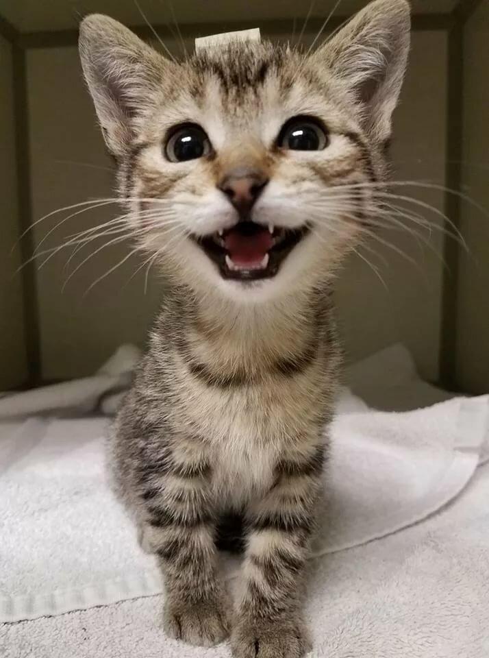 бульон кошка улыбается фото обратите
