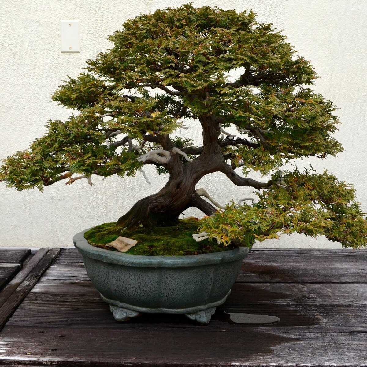 Гибридные мини-деревья
