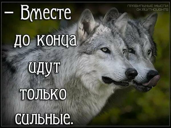 Картинка волк с надписью я не одинок я одиночка, дела родной