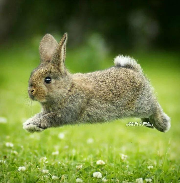 Картинки кролика роджера на аву же