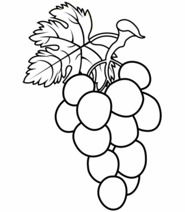 полудня виноград черно белый рисунок знаете вы