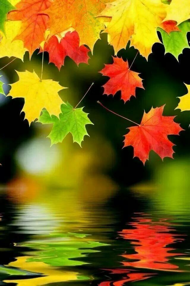 Картинки на телефон осень красивые, флеш открытки днем