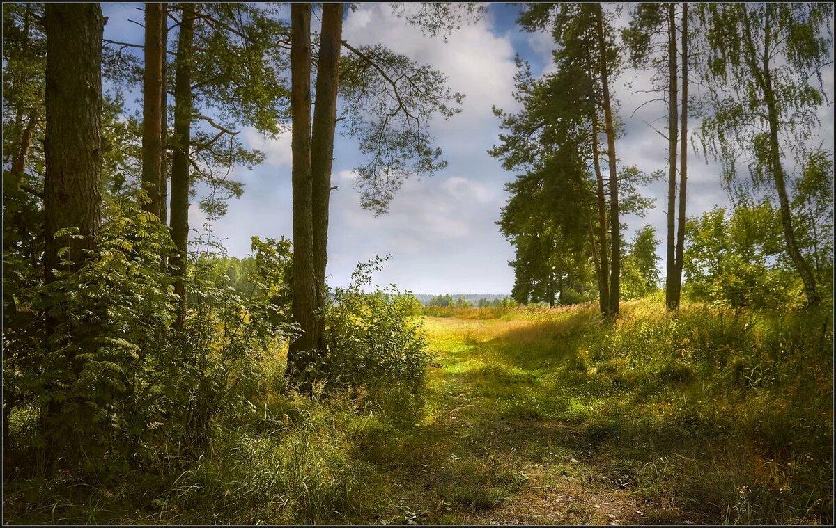 картинки лесных опушек его