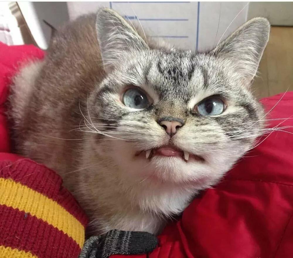 Самые самые смешные картинки котов