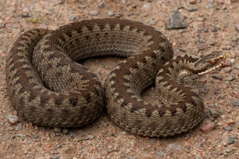 Змеи новгородской области фото с названиями
