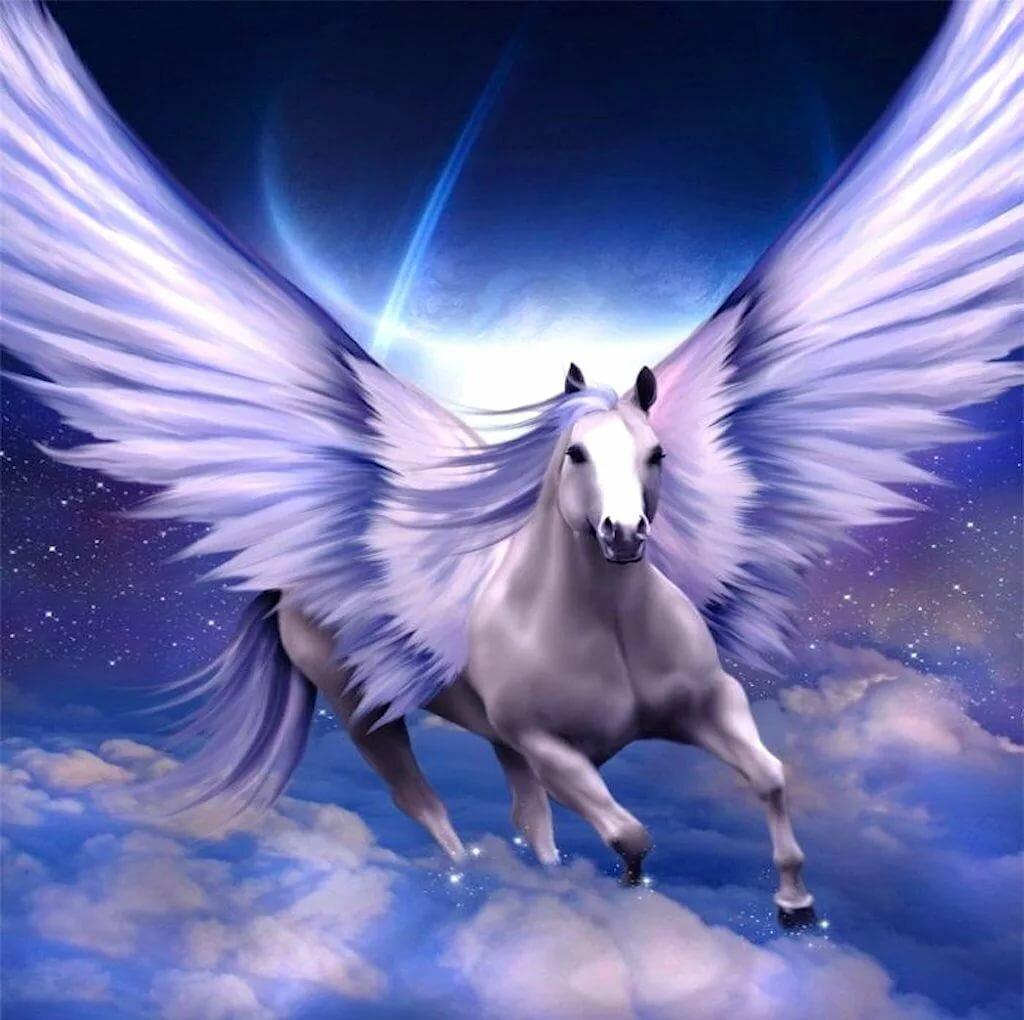 картинки с лошадями и крыльями