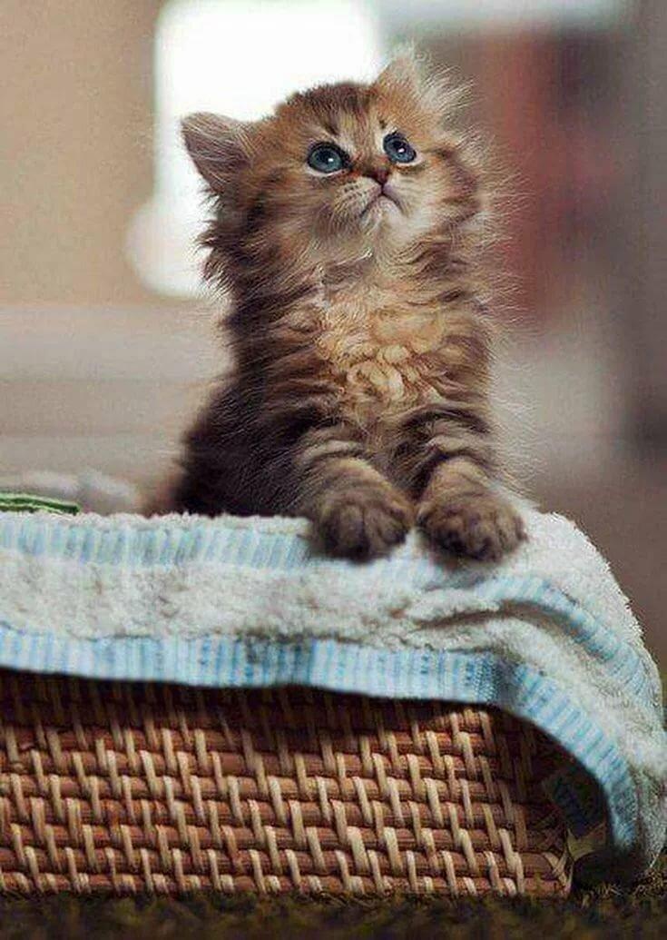 Юбилей, котята открытки гиф