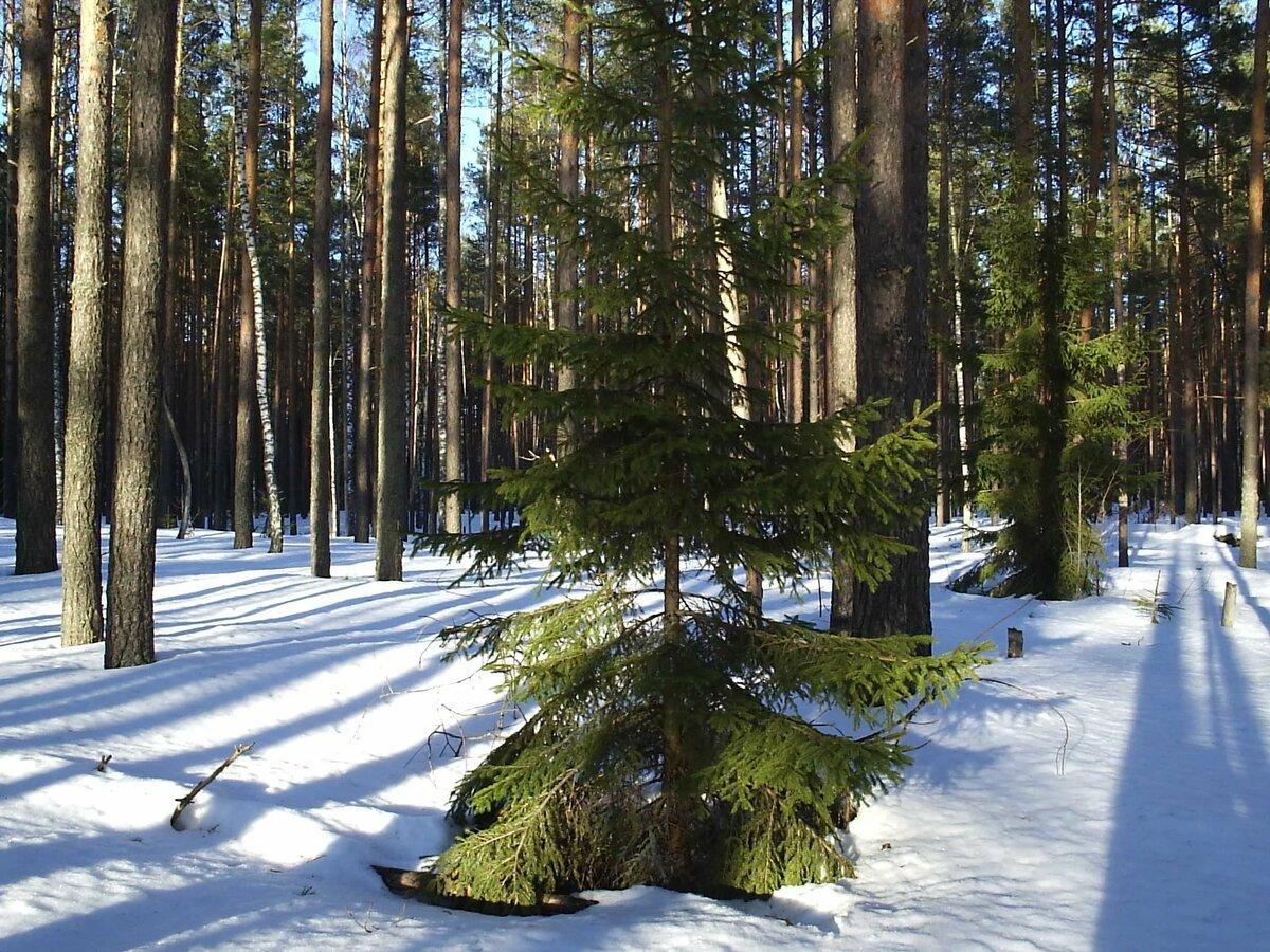 Природа курского края фото