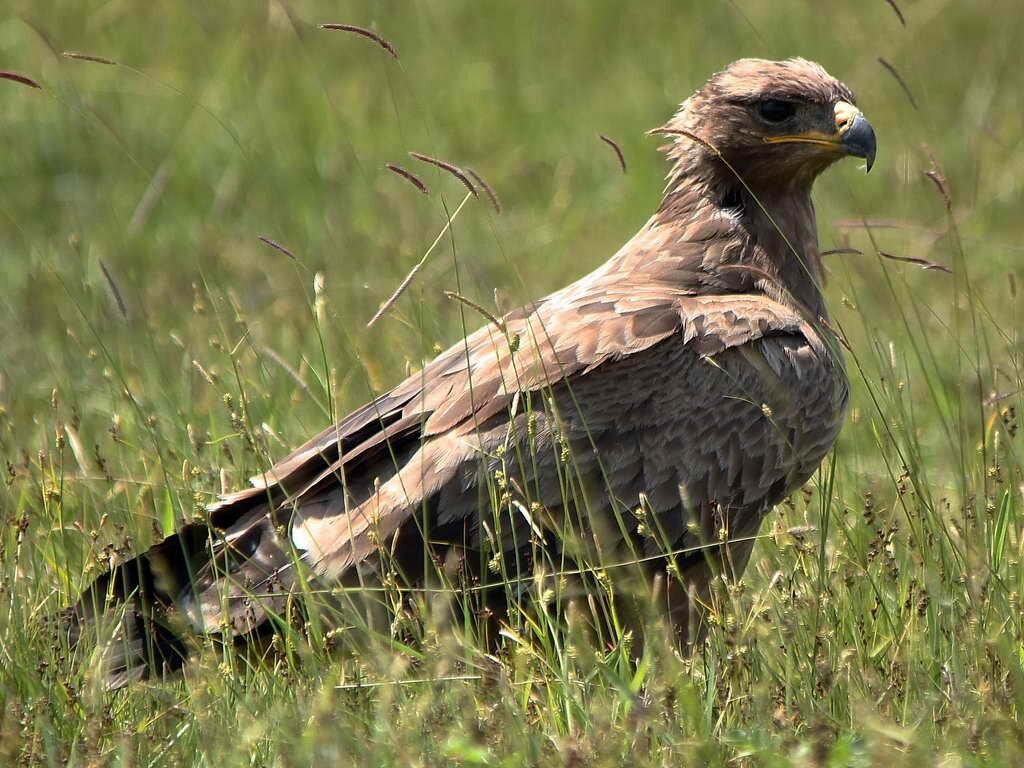 Картинка птицы степи