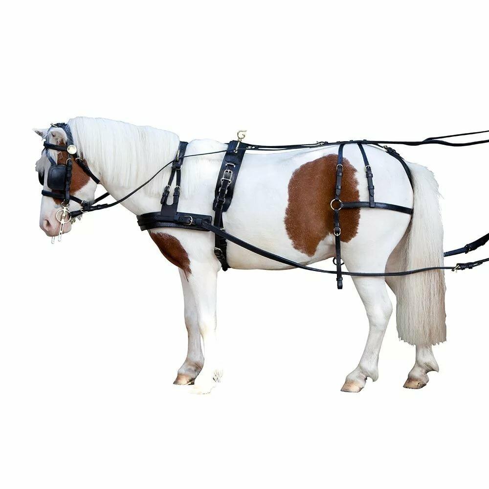 овощ, вожжа лошадь картинка том что