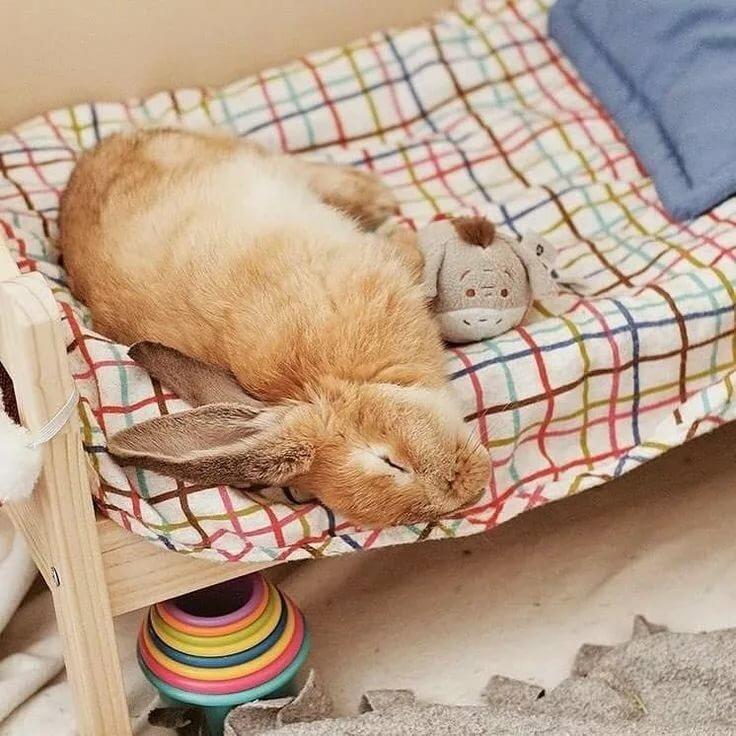 однотипные, красивое фото спящей зайки дусларын
